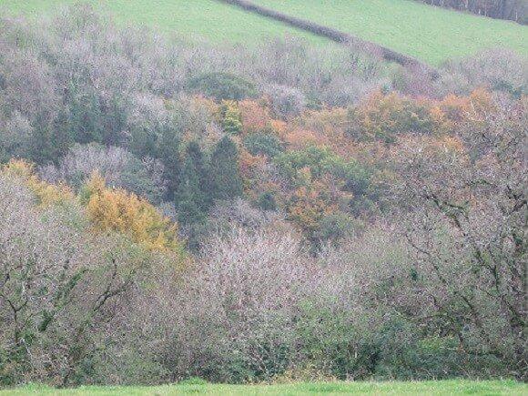 Gelli Aur Woodlands